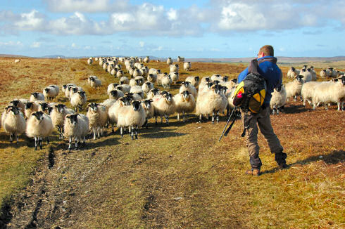 Picture of a photographer standing in front of a herd of sheep