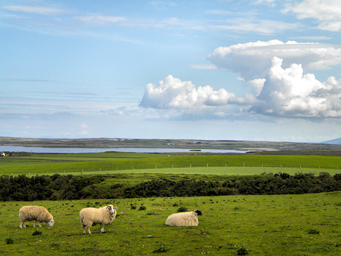 Picture of 3 sheep, a loch (lake) and some dramatic clouds