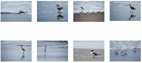 Screenshot of thumbnails of bird pictures